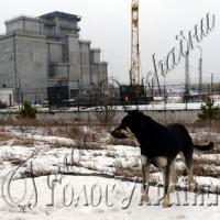 Міфи про Чорнобильську зону потребують розвінчання