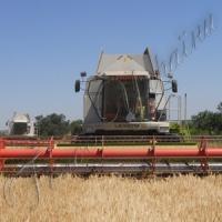 Збирання ранніх зернових йде повним ходом