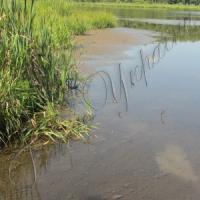 ...озеро Нечимное катастрофически обмелело