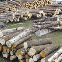 Готовятся экспортировать только обработанную древесину