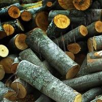 Зріс попит на дрова