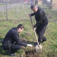 Стартувала акція «Посади дерево»
