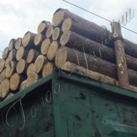 Ліс, відправлений на експорт з порушенням закону, підлягає конфіскацї