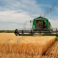 На Вінниччині перший мільйон тонн зерна зібрали з третини площ