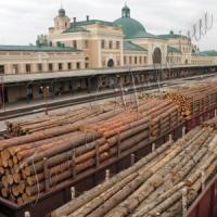 Українські держлісгоспи відправляли до Євросоюзу ліс за фіктивними документами