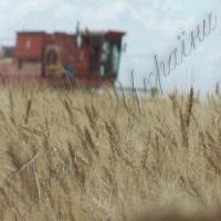 Другий мільйон тонн зерна буде не останній