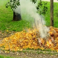 Містянам розкажуть про шкоду спалення листя