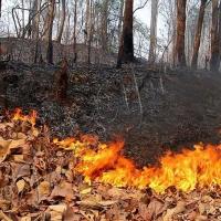 У місті впровадили штраф за спалювання листя
