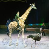 Привітний жираф та інші