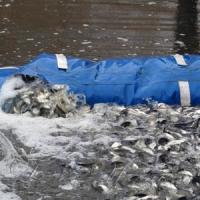 У Дніпро інвестували  30 тонн «живого срібла»