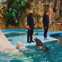 Геша + Бьюти = пополнение!.. В харьковском дельфинарии