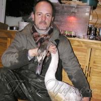 Вдячний пірует врятованого лебедя