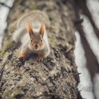Єгері Мокрянського допомагають звірам пережити зиму