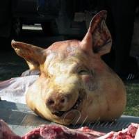 Свиняча чума принесла колосальні збитки