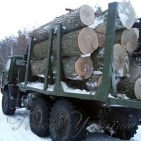 На Житомирщині знову напали на лісівників