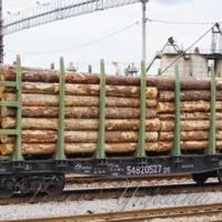 Закарпатці благають не експортувати ліс-кругляк