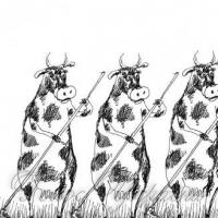 Чи не доведеться сівачам запрягати волів і корів?