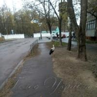 Лелека гуляв вулицею...