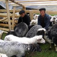 Смак бринзи охоронятиме Асоціація вівчарів