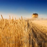 Почав би з розвитку аграрного сектору