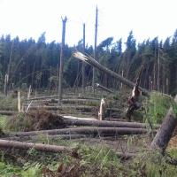 ...лісівники підрахували збитки від вітровалу