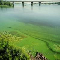 Дніпро й внутрішні водойми столиці в небезпеці!