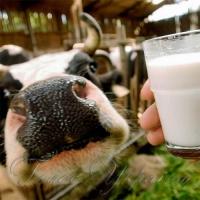 Дійшли руки до молочних рік