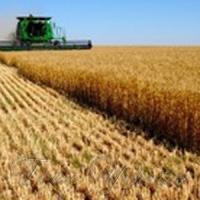 Більше мільйона тонн зерна — уже не дивина