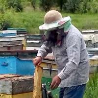 Як бджоли допомагають виживати мешканцям прифронтових територій
