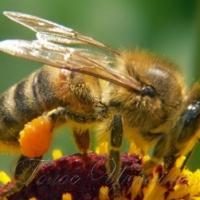 Бджолярі зі всього світу прибули на Прикарпаття