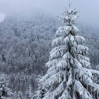 Лісові красуні потребують захисту