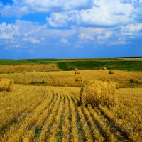 Завдання — продавати не врожай, а готову продукцію