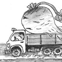 Бурякові мандри: Чому «цукровий Донбас» закуповує корінці в «чужих» областях