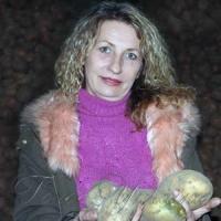 З голландського комфорту —  на наше картопляне поле