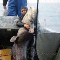 Ікринки сома-гіганта могли поповнити рибні запаси
