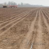 Ранні ярі зернові компенсують кукурудзою, просом та гречкою