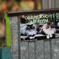 Обережно!!! Злі коти