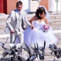 Весілля й голуби!..