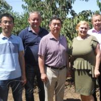 Черешневі сади інспектують китайські експерти