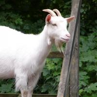 Особливості тваринництва в зоні бойових дій