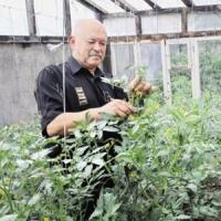 Пенсіонер з Полісся вирощує 149 сортів томатів