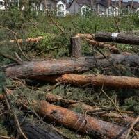 SOS: по-варварськи нищать ліс!