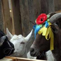 Кози зможуть самі заробити собі на харч
