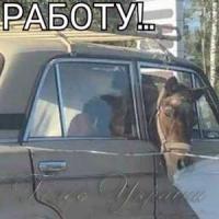Будні Лаврова...