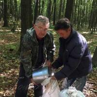 Заготівля якісного насіння —  основа міцного лісу