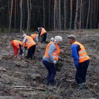 Тепла осінь дала змогу продовжити лісовідновлення