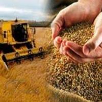 Кукурудза, соняшник і соя - у плюсах