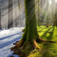 Людство щораз глибше усвідомлює виклики, пов'язані зі зміною клімату