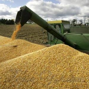 Столько зерна еще не собирали