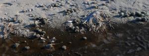 Браконьєри перетворюють Світязь на болото